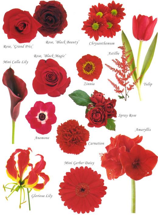 Fl Red Wedding Flowers By Heidi